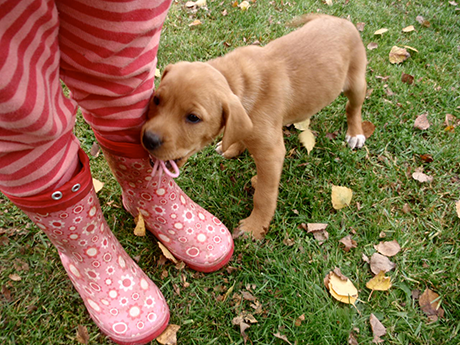 Hundeschule Curriculum Canis - Welpenschule