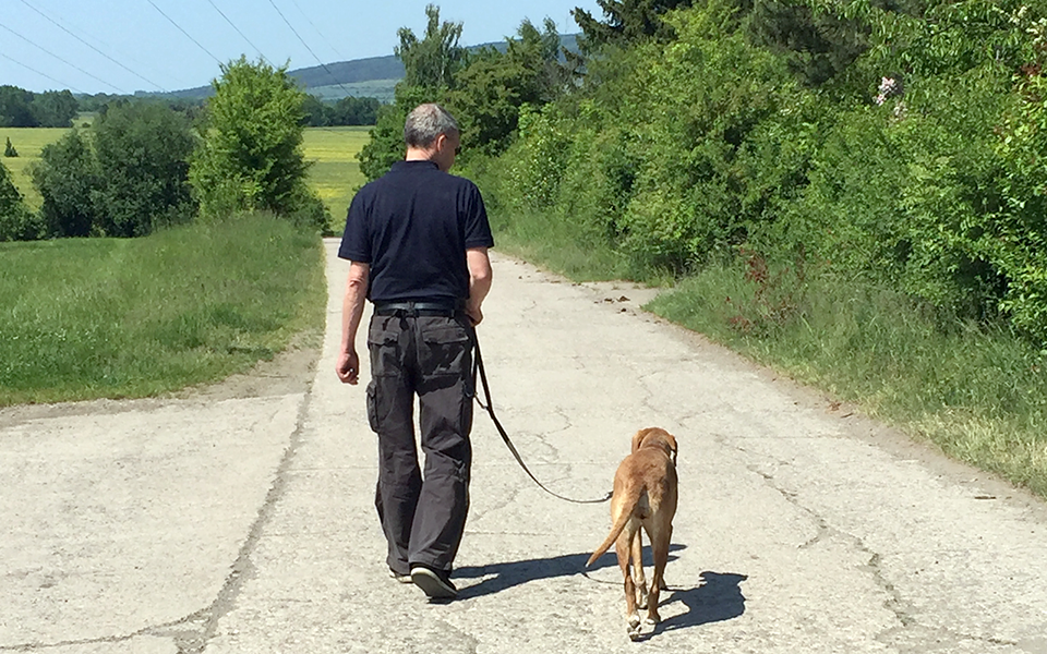 Hundeschule Curriculum Canis - Leinenführigkeit